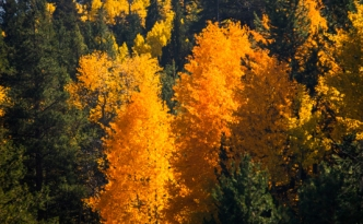 PL20131010-Fall-Colors-0472_3_4v2